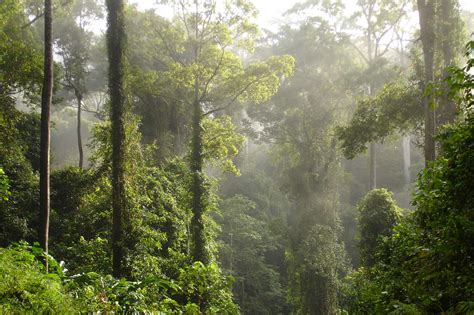 Borneo's Diverse Reef and Rainforests in Comfort and Style