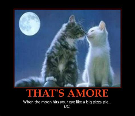Valentines Day Quotes With Kittens