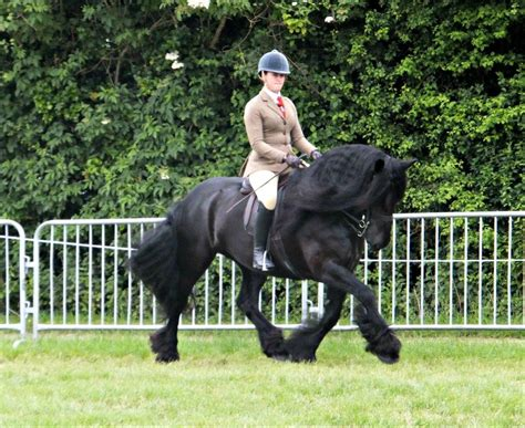 Teesdale Mercury: Outstanding dales pony making history