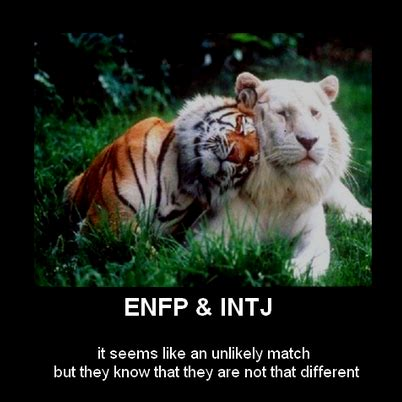 He Sees It! INFP's & INTJ's Meet in the Middle   Naturally