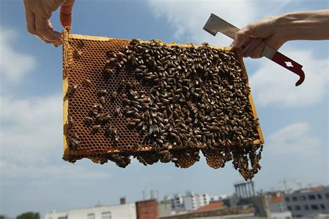 Beekeepers in Delta Township Pleading Their Case