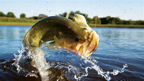 A How-To Guide to Pond Fishing