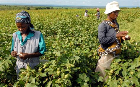 Swaziland   TechnoServe - Business Solutions to Poverty